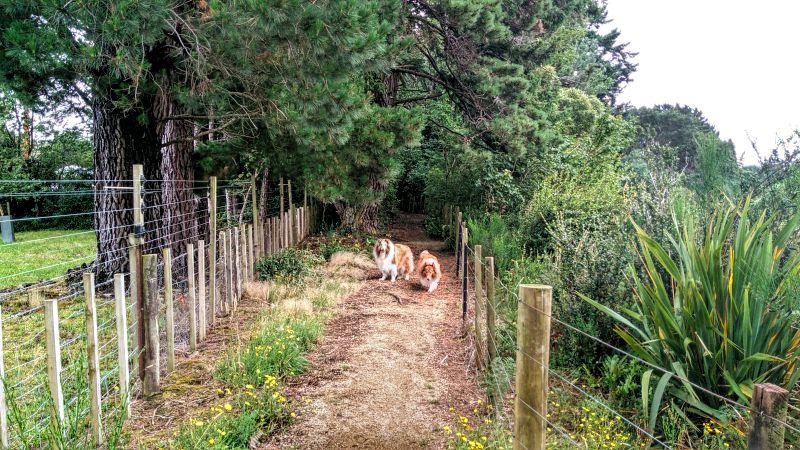 eketahuna-cliff-walk-pets.jpg